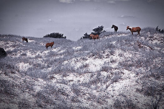 The Hillside by Chris Brehmer Photography