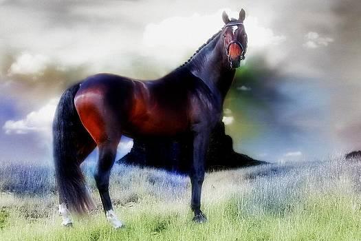 The Holsteiner Sporthorse by Amanda Struz
