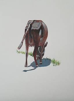 Usha Shantharam - The Holy Cow and dung 3