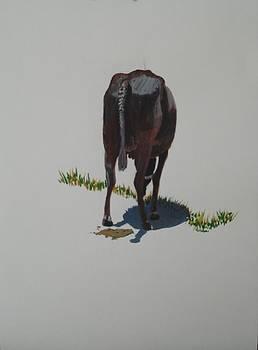 Usha Shantharam - The Holy Cow and dung 5