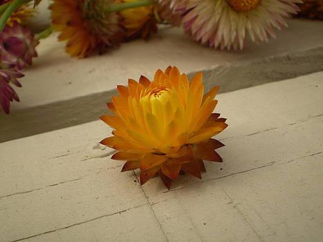 The holy flower by Fabian Cardon