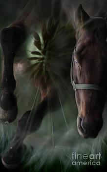 Angel Ciesniarska - the horse and the dandelion