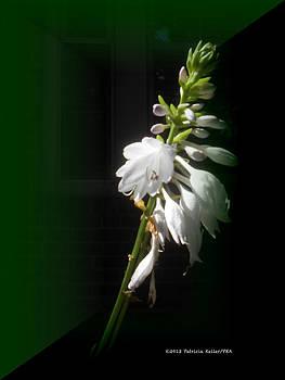The Hosta Flowers by Patricia Keller