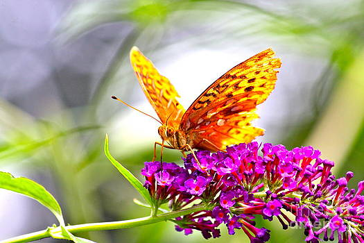 The Hungry Butterfly by Jay Nodianos
