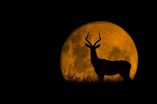 The Impala and The Moon by Mario Moreno