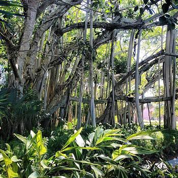 The Jungle by Justine Prato
