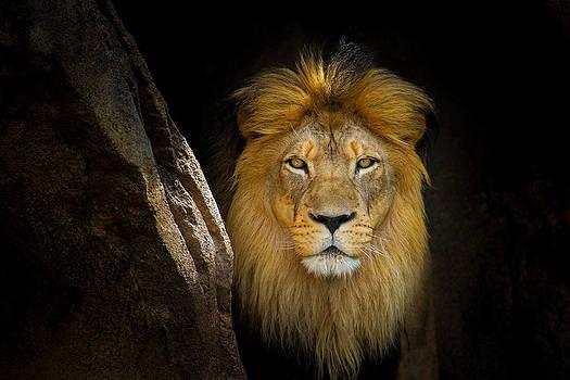The King by Howard Weitzel