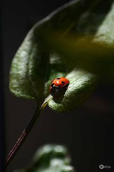 The Lady bug by Phillip Segura