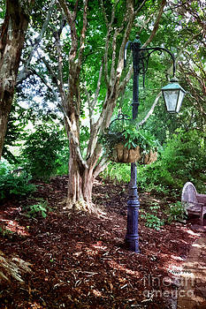 Shari Nees - The Lamp Post