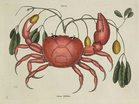 The Land Crab by British Library