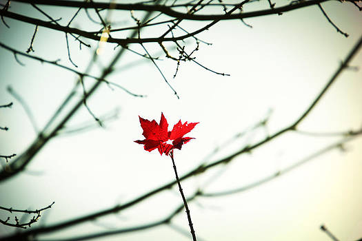 The Last Autumn Leaf by David Schoenheit