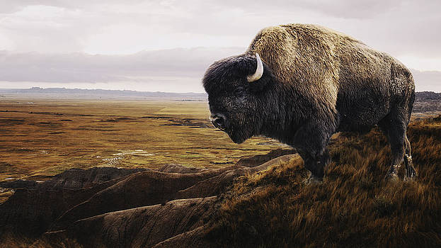 The Last Buffalo by Ron  McGinnis