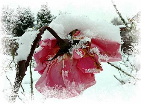 The Last Rose by Morag Bates