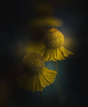 The Last Waltz by Paul Barson