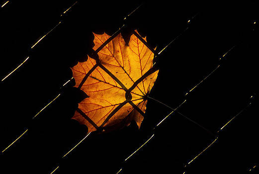 Joe  Connors - The Leaf in the Fence