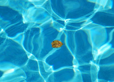 Ramunas Bruzas - The Leaf