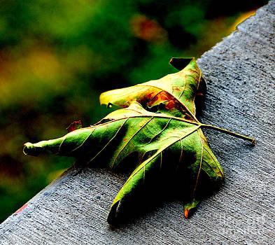 The Leaf by Yasin Baran