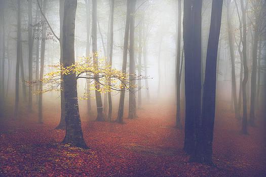 The Light-Tree II by Toma Bonciu