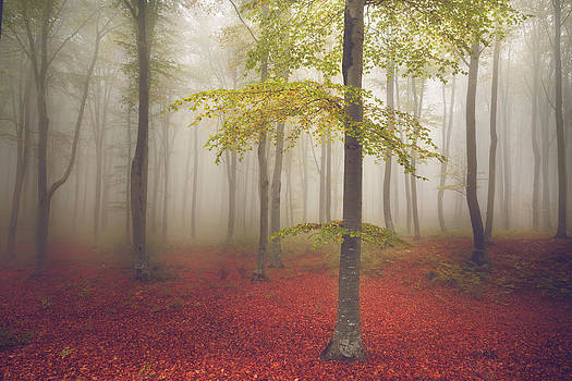 The Light Tree III by Toma Bonciu