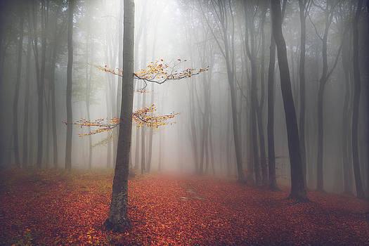 The Light-Tree by Toma Bonciu