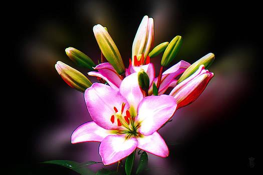 The Lilium Garden - Pink Trumpet Lily by Li   van Saathoff