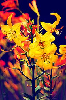The Lilium Garden - Yellow Whoppers by Li   van Saathoff