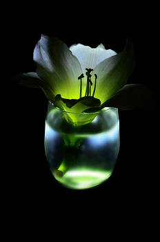 The Lily and the Light by Brooke Clark