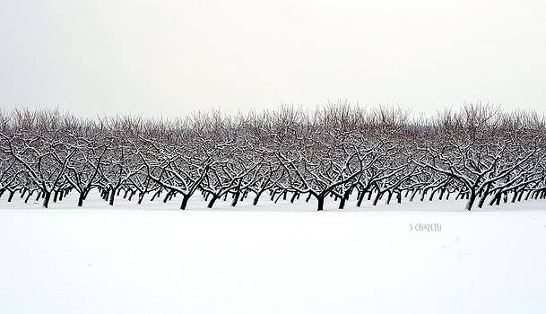The Line Between The Snow and the Sky by Steve Chiarelli