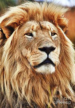 The Lion by Jonathan McCallum