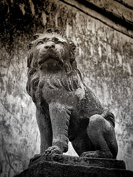 The Lion by Karen Lindale