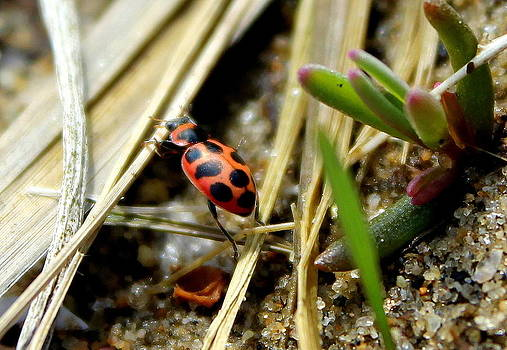 The Little Lady Bug That Could by Lindsey Henderson