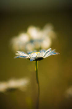 The Little Things in Nature by Matt Dobson