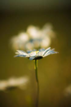 Matt Dobson - The Little Things in Nature