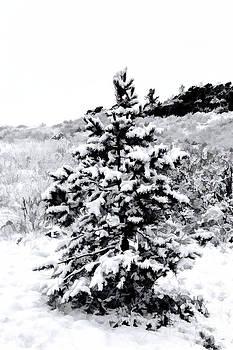 Jon Burch Photography - The Littlest Christmas Tree