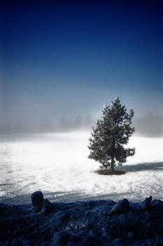 The lone pine by Dan Quam