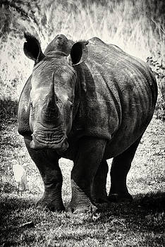 The Lone Rhino by Leon James