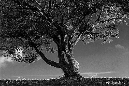 The Lone Tree Black and White by Marty Gayler