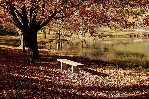The lonely bench by Frederic Vigne