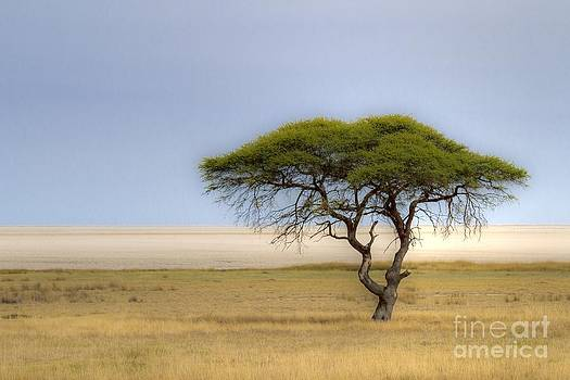 The lonely Tree by Juergen Klust
