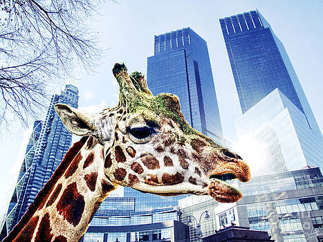 The Lost Giraffe by Nishanth Gopinathan
