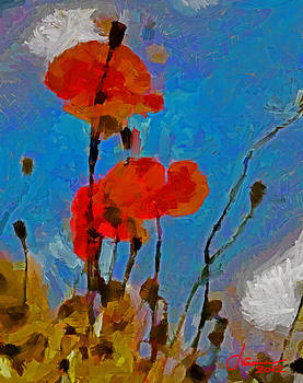 The Lovely Poppies TNM by Vincent DiNovici