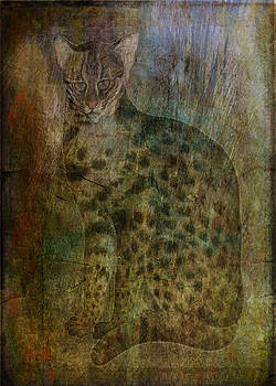The Lynx Has Landed  by Sarah Vernon