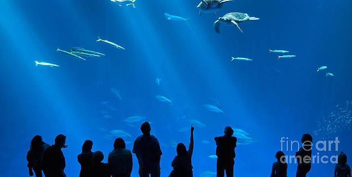 Jamie Pham - The magnificent Open Sea Exhibit at the Monterey Bay Aquarium.