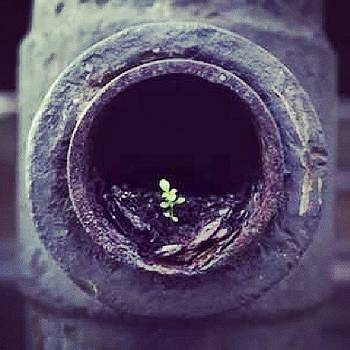 The Meaning Of #life  #nature by Abdelrahman Alawwad