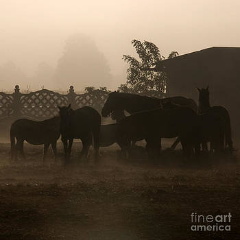 Angel Ciesniarska - The misty morning