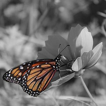 The Monarch by Amanda Leigh
