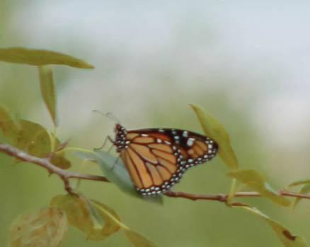 The Monark by Rhonda Humphreys