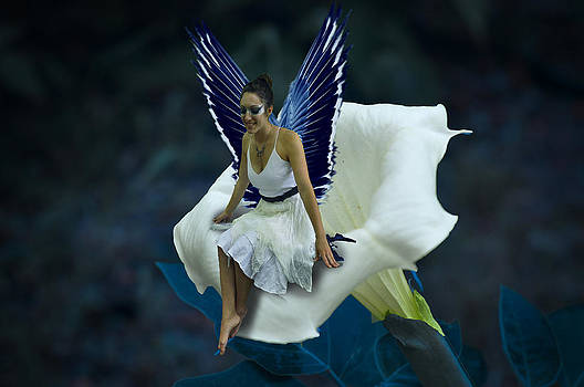 The Moon Fairy by Cherie Haines