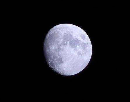 The Moon in November by Ellen Ryan