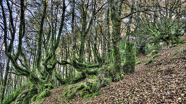 Weston Westmoreland - The Mossy Creatures of the old Beech Forest 3